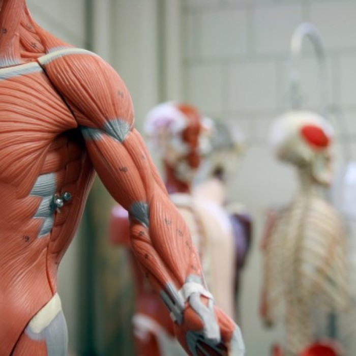 Anatomy and Physiology Courses - Open Study College